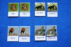 carte delle nomenclature